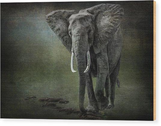 Elephant On The Rocks Wood Print