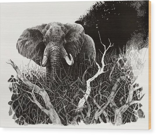 Elephant Wood Print by Paul Illian