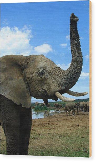 Elephant Posing Wood Print