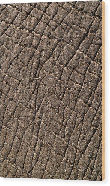 Elephant Skin, Zimbabwe Wood Print