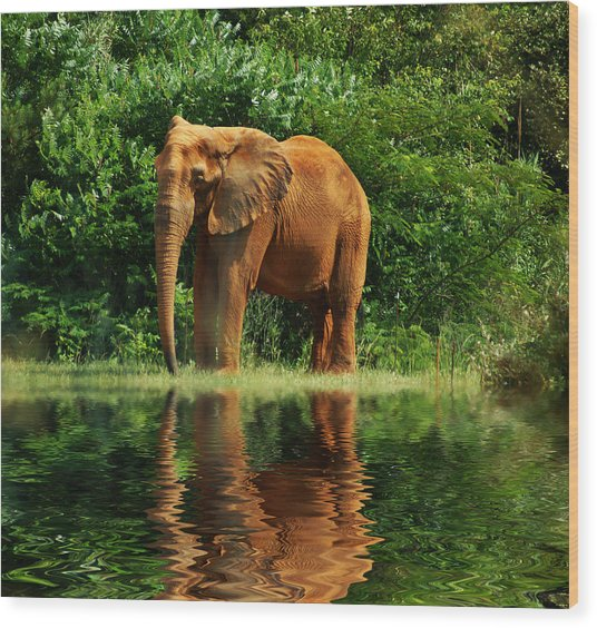 Elephant The Giant Wood Print