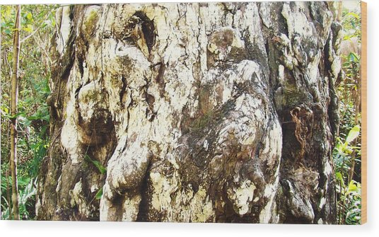 Elephant Tree Wood Print by Van Ness