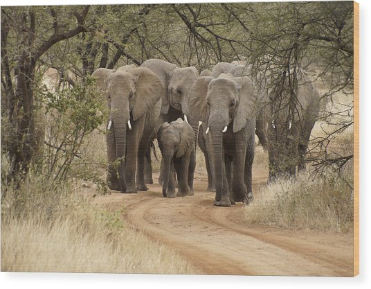 Elephants Have The Right Of Way Wood Print