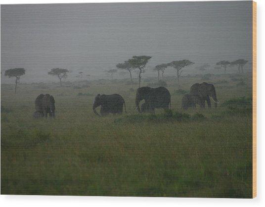 Elephants In Heavy Rain Wood Print
