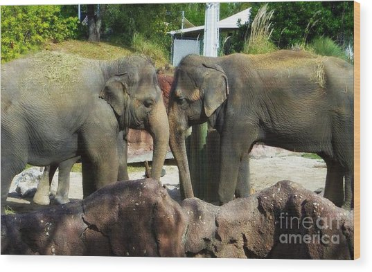 Elephants Snuggle Wood Print