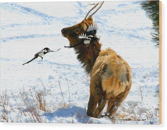 Elk And Magpie  Wood Print by Rebecca Adams