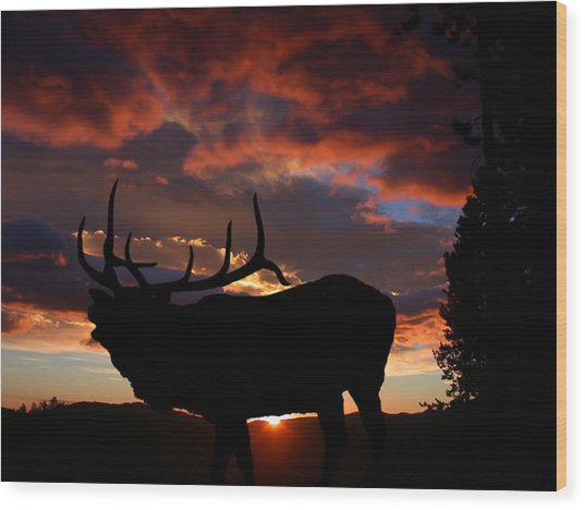 Elk At Sunset Wood Print