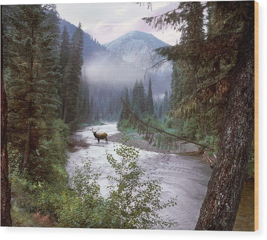 Elk Crossing 2 Wood Print