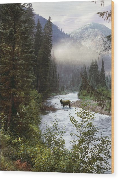 Elk Crossing Wood Print