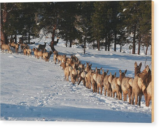 Elk Train Wood Print