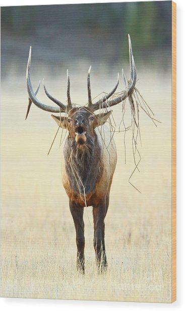 Elk With A Headdress Wood Print