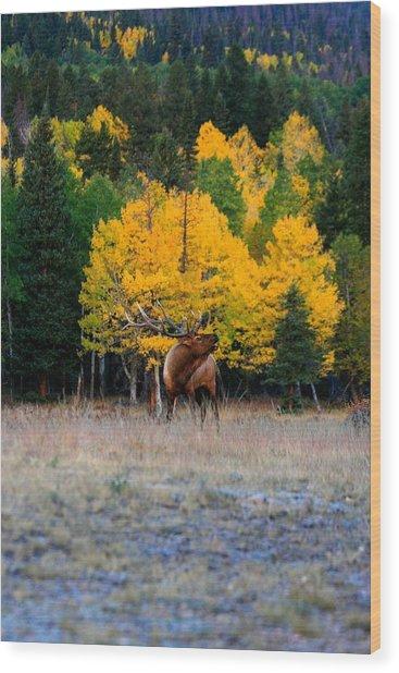 Elks Last Call Wood Print by Rebecca Adams