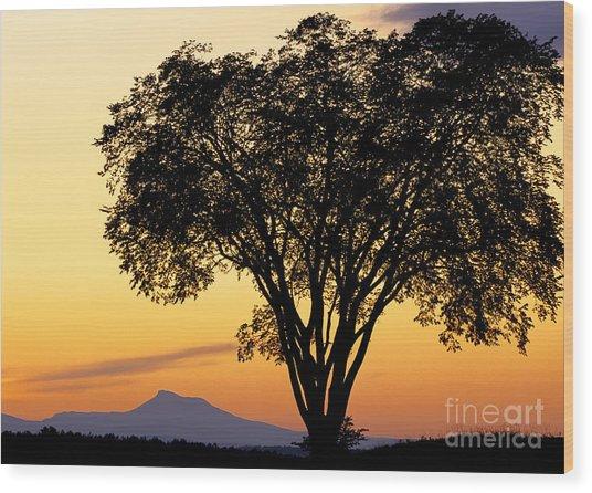 Elm At Twilight Wood Print