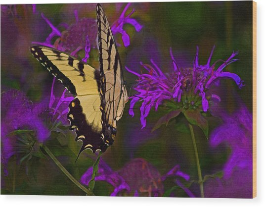 Elusive Butterfly Of Love Wood Print by Mamie Thornbrue
