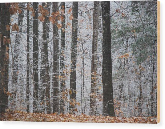 Enchanted Forest Wood Print