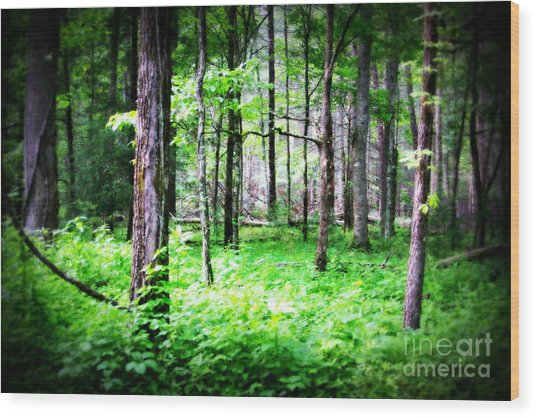 Enchantment Wood Print