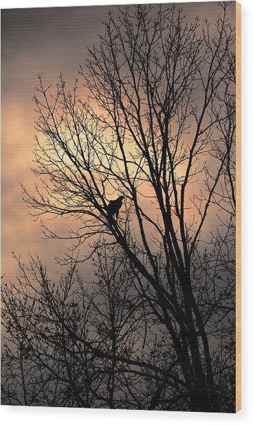 End Of The Day  Red Tailed Hawk Wood Print