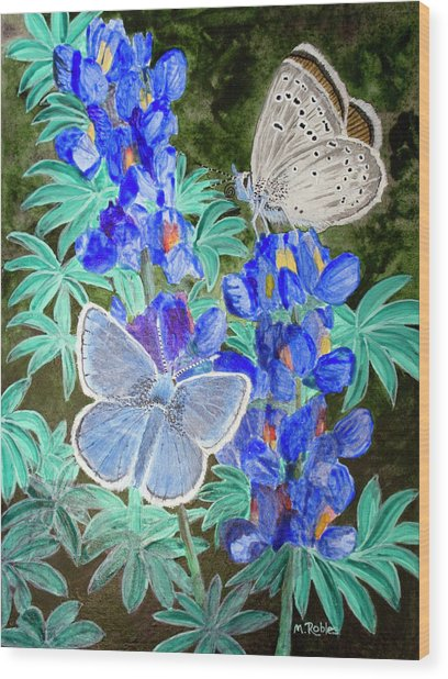 Endangered Mission Blue Butterfly Wood Print