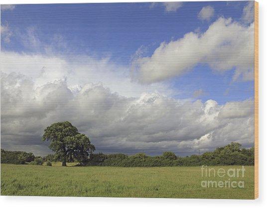 English Oak Under Stormy Skies Wood Print