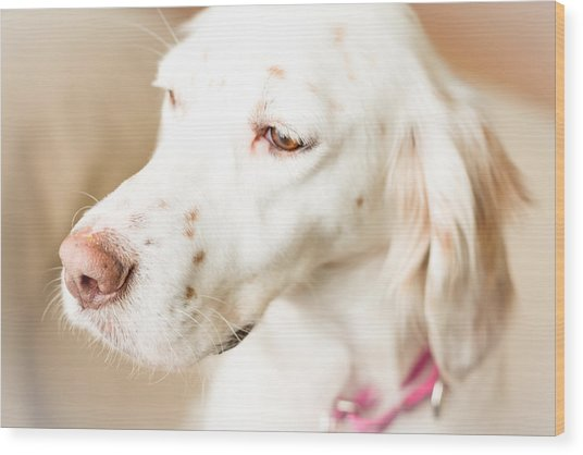 English Setter In Natural Light Wood Print