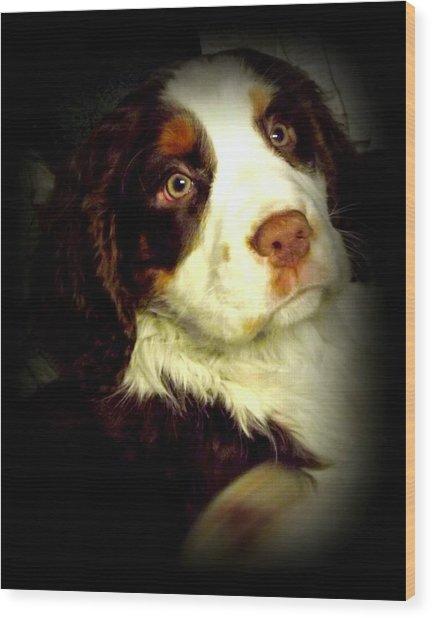 English Springer Spaniel Wood Print by Dancingfire Brenda Morrell