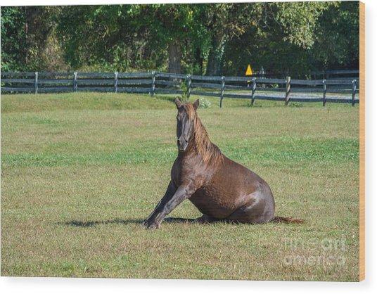 Equestrian Beauty Wood Print