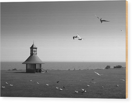 Esplended Gulls Wood Print