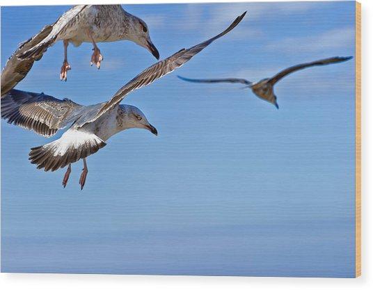 Essaouira Seagull Wood Print