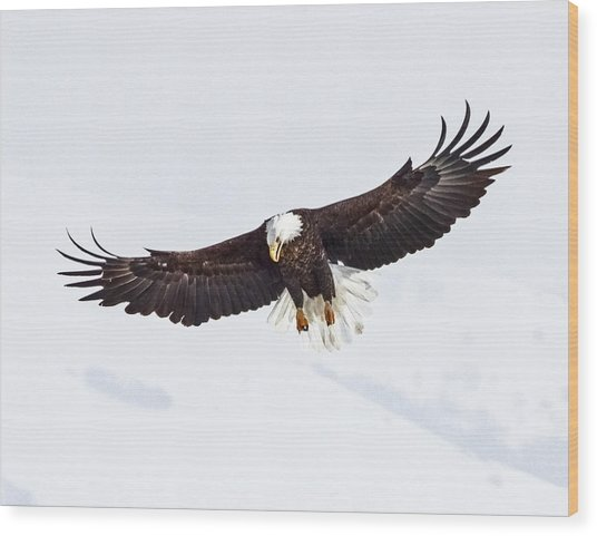 Essence Of Eagle Wood Print