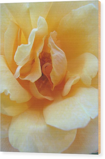 Lightness Of Being - Yellow Rose Macro -floral Art From The Garden Wood Print
