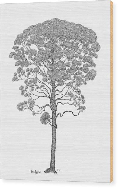 Eucalyptus  Wood Print