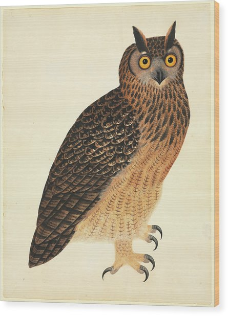 Eurasian Eagle-owl Wood Print by Natural History Museum, London