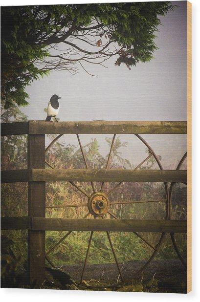 Eurasian Magpie In Morning Mist Wood Print