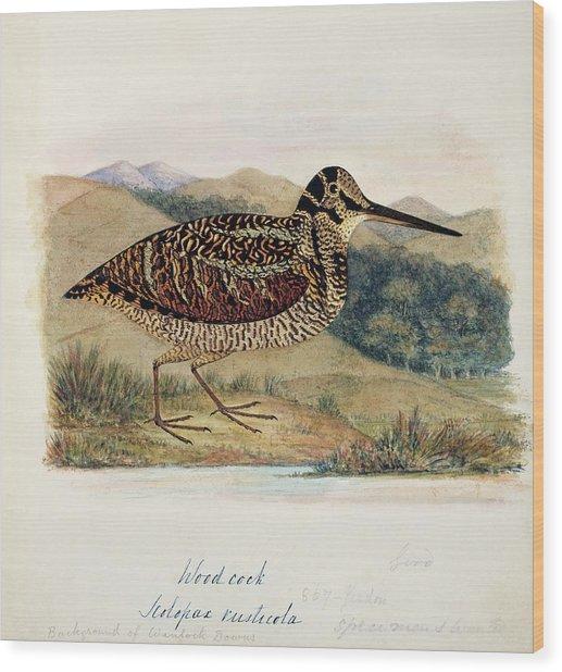 Eurasian Woodcock Wood Print