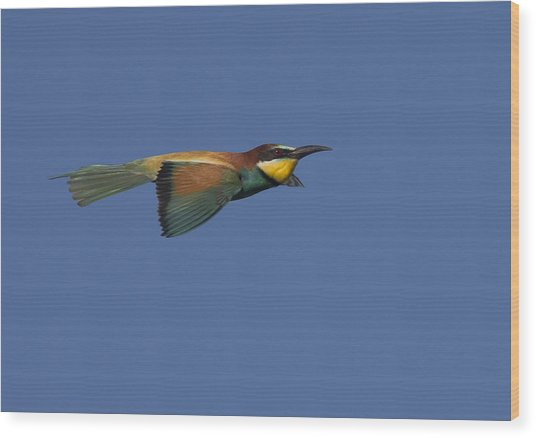 European Bee-eater Wood Print