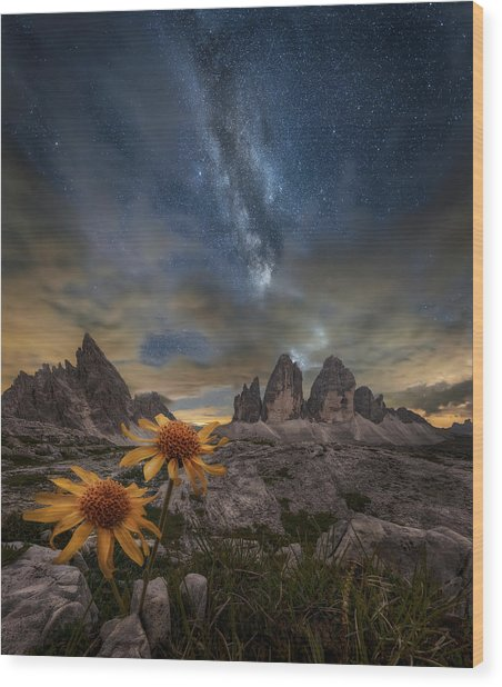 Even The Flowers Seem To Be Fascinated By The Stars Wood Print by Alberto Ghizzi Panizza