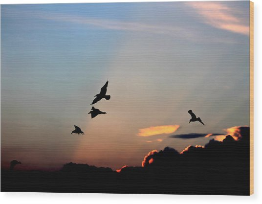 Evening Dance In The Sky Wood Print
