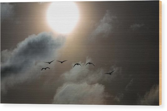 Evening Flight Wood Print