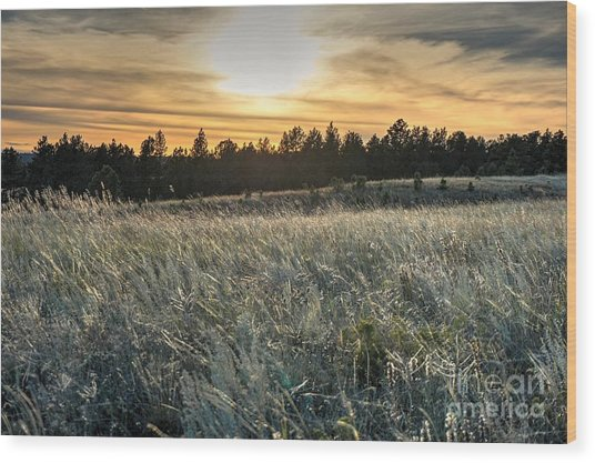 Evening Grasses In The Black Hills Wood Print