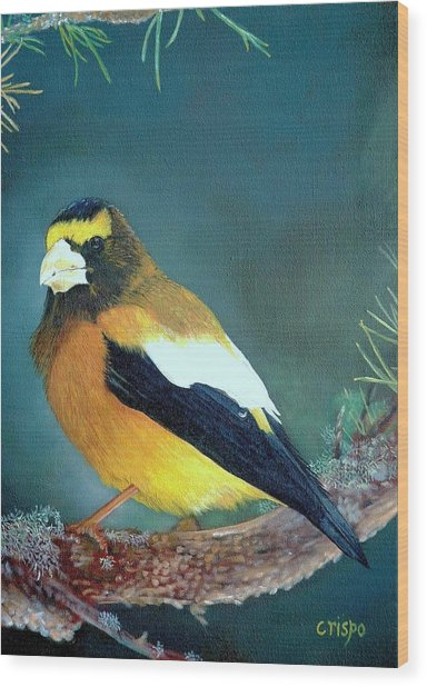 Evening Grosbeak Wood Print