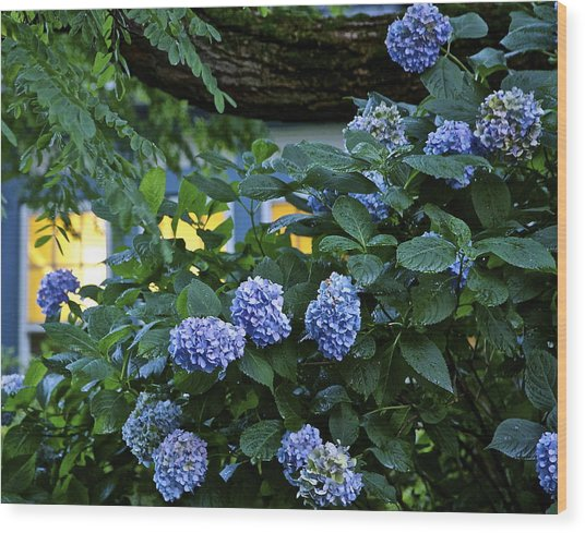 Evening Hydrangeas Wood Print