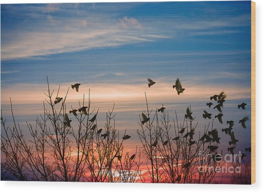 Evening Migration Wood Print by Jolanta Meskauskiene