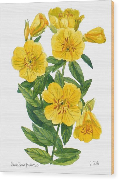 Evening Primrose - Oenothera Fruticosa Wood Print