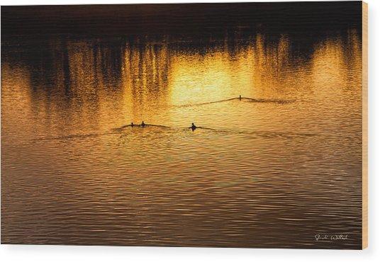 Evening Swim Wood Print by Jardi Welsch