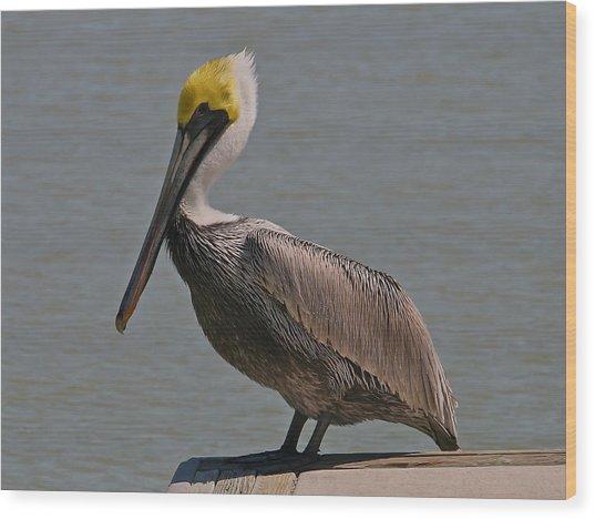Everglades Brown Pelican Wood Print