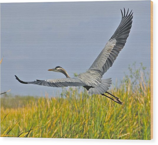 Everglades Flight Wood Print