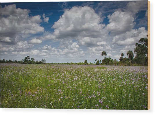 Everglades Spring Wood Print