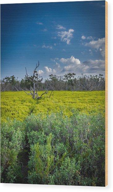 Everglades Tree Wood Print