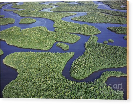 Everglades Waterways Wood Print