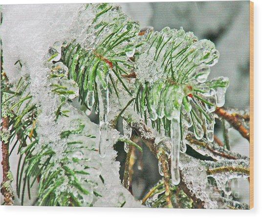 Evergreen Icicles IIi Wood Print by Chuck Flewelling
